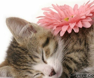cat, flower, and sweet image