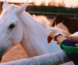 horses and beautiful image