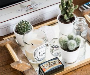 cactus, white, and candle image