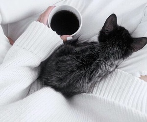 cat, coffee, and white image