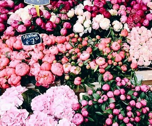flower, flowers, and gorgeous image