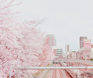 pink, japan, and city image