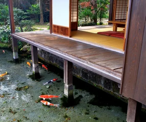 japan, fish, and house image