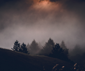 trees, nature, and fog image