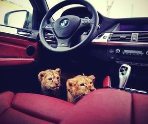 car, bmw, and lion image