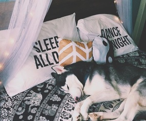 bedroom, pretty, and dog image