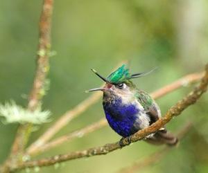 animal, aves, and bird image