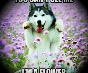 dog, flowers, and funny image