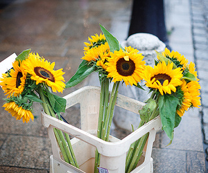 flowers, sunflower, and street image