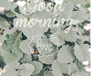 flower, good morning, and morning image