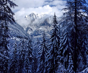 forest, snow, and mountains image