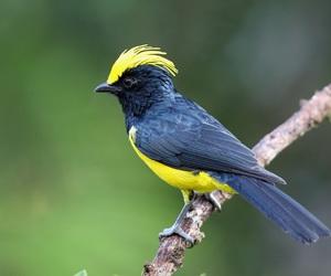 animal, aves, and fauna image