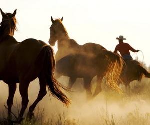 cowboys and horses image