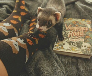 autumn, book, and animal image