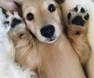 dog, cute, and animal image