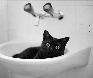 black, cat, and sink image