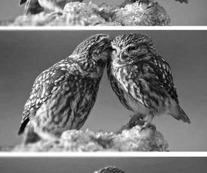 owl, funny, and kiss image