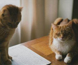 cat, kodak gold 200, and nikkormat ftn image