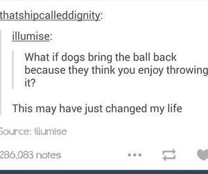 awkward, ball, and dog image