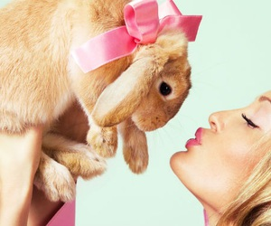 bunny, easter, and animals image