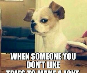 funny, dog, and joke image