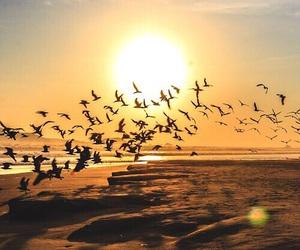 bird, beach, and animal image