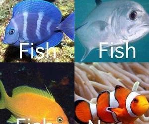 nemo, fish, and funny image