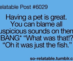 funny, lol, and pet image