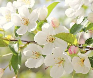 blossoms, white, and spring flowers image