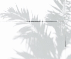 palm trees, shadow, and palms image