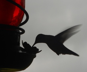 aves, bird, and black image