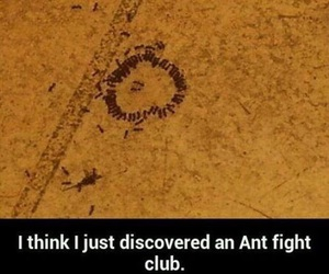 funny, ant, and animal image