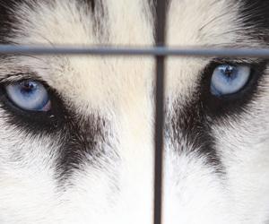 alaska, animal, and blue image