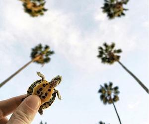 turtle, animal, and sky image