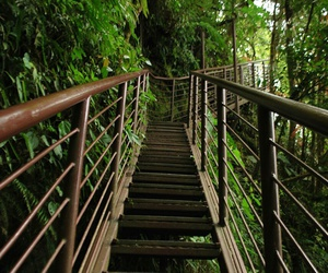 costa rica, nature, and stairs image