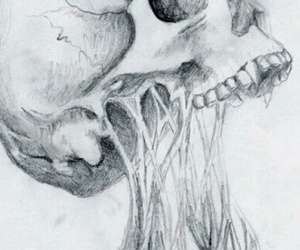 skull, black and white, and art image