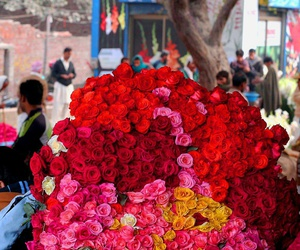 beautiful, colourful, and Lahore image