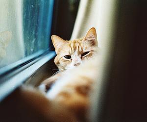 cat, cute, and orange image