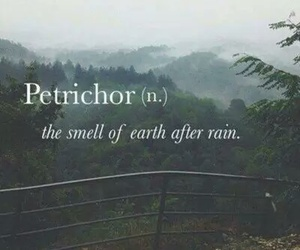 rain, petrichor, and smell image