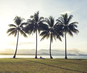 landscape, palms, and sea image