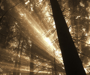 awesome, cool, and forest image