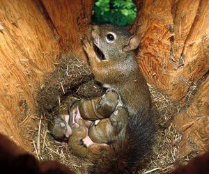 squirrels, baby animals, and cute animals image