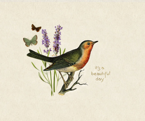 bird, butterfly, and drawing image
