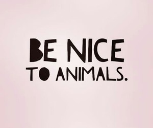animal, vegan, and quotes image
