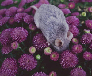 flowers, animals, and mouse image
