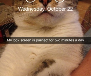 cat, funny, and iphone image