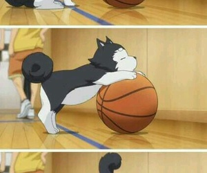 anime, kuroko no basket, and dog image