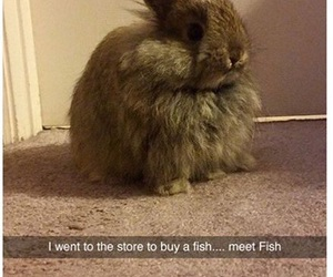 funny, fish, and bunny image