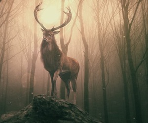 deer, light, and ombre image