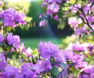 beautiful, garden, and nature image